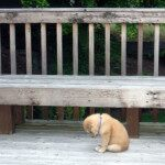 Sad Puppy 3