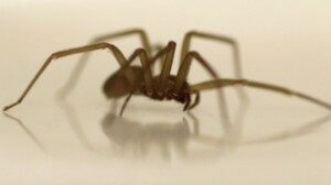 Housecall For Health: Spider Venom Breast Cancer Cure?