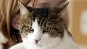 Study: Cat Litter Associated With Suicide Risk
