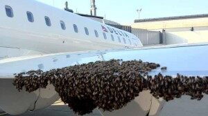 Thousands of Bees Cause Flight Delay