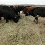 Rising Beef Prices Hit Shoppers, Diners