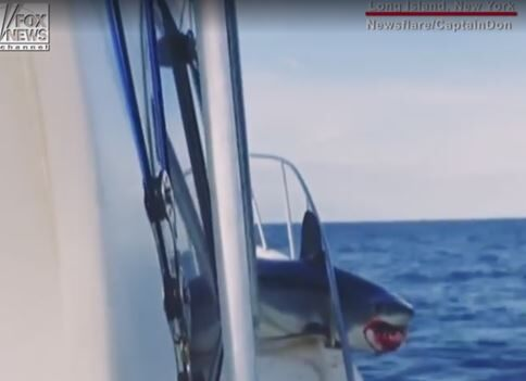 Massive mako shark jumps onto fishing boat, gets stuck in handrail