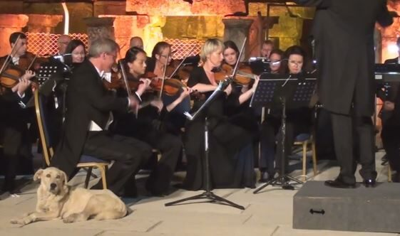 Stray dog joins orchestra on stage during a live performance